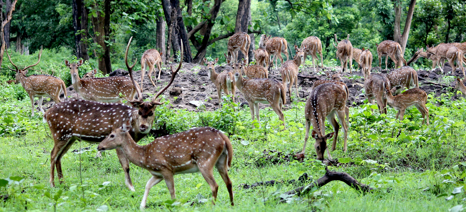 tour chitwan national park nepal