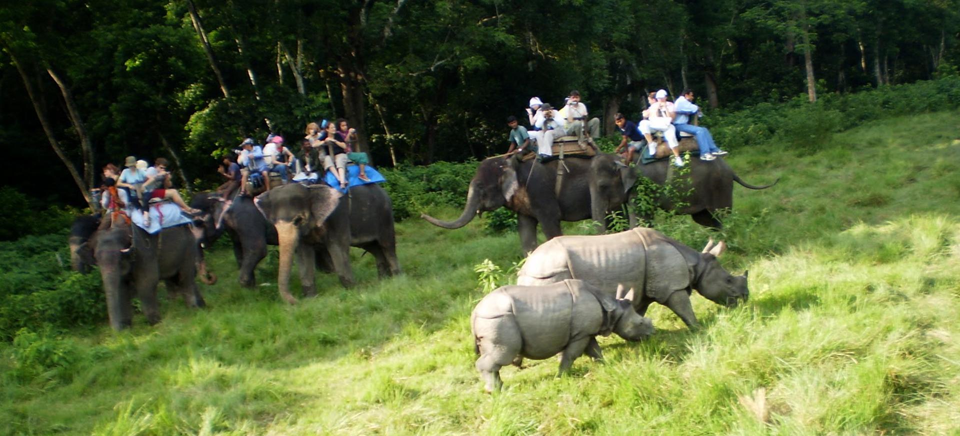 Kathmandu-Pokhara-Chitwan-Jungle-Safari-Tour.