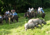 Kathmandu-Pokhara-Chitwan-Jungle-Safari-Tour.