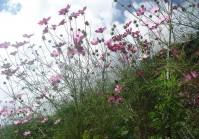 Nepal flora and fauna